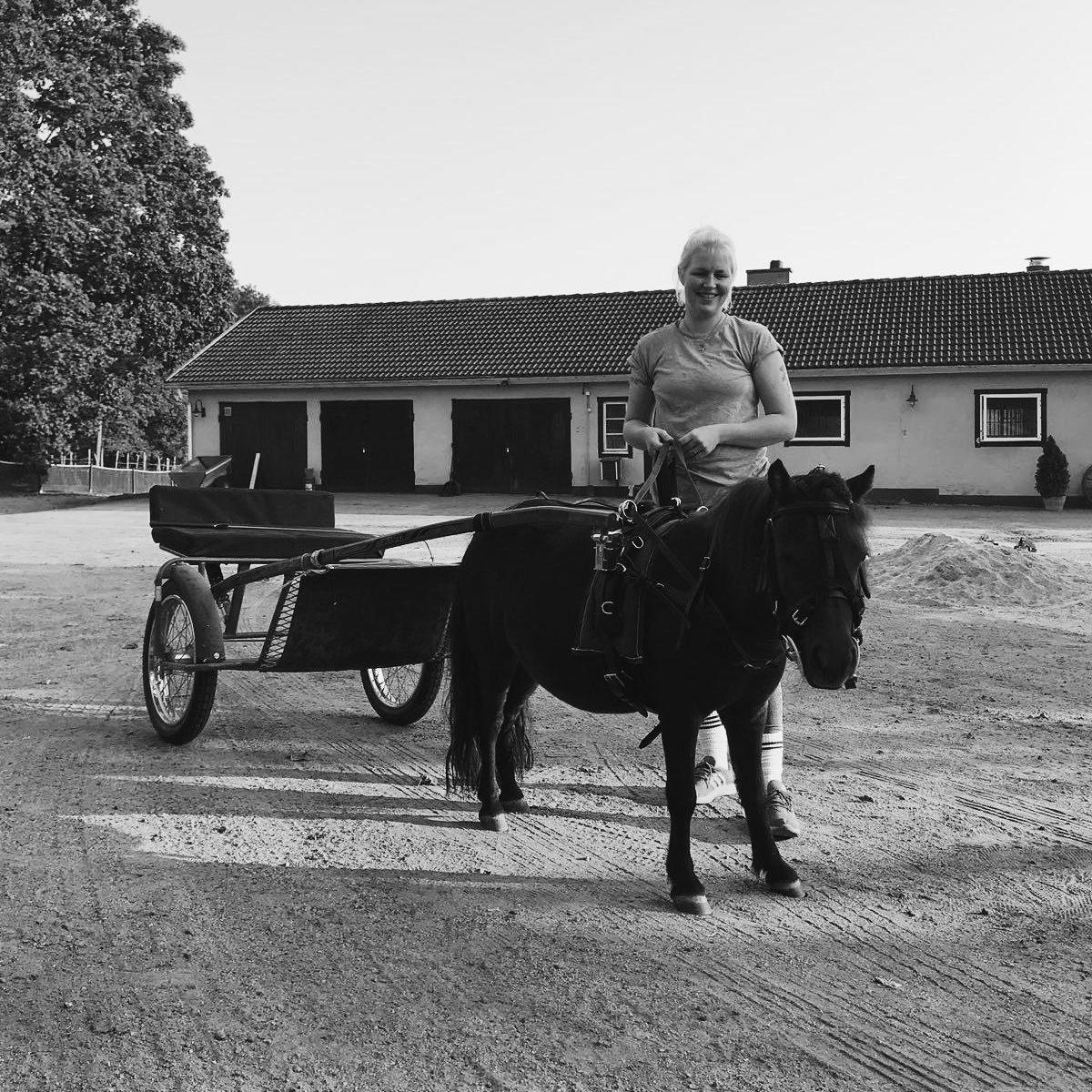 Hevosen kehonhuolto ja hyvinvointia